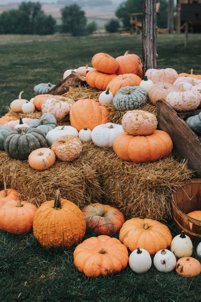 fall .jpg